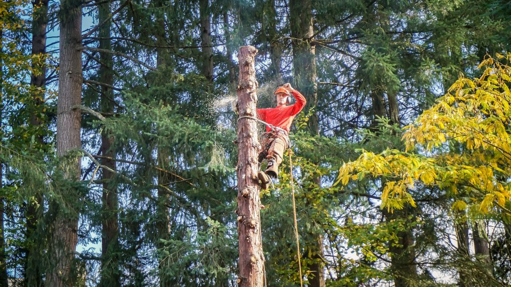 Norman Tree Services worker cutting down tree with an electric saw on top of a tree
