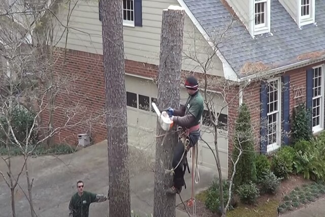 Norman OK Tree Care emergency tree services employee cutting down a tree after climbing it.