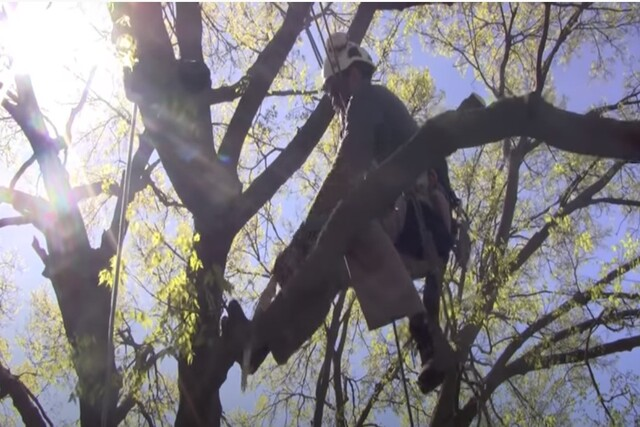 Norman OK worker on a tree trimming a branch.