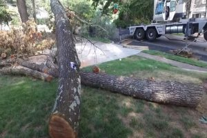 Many's Tree Care residential tree cut down and laying on the yard of a home.