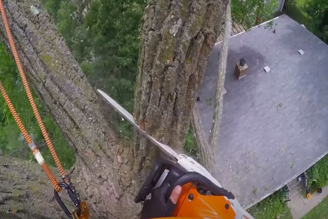 Many's Tree employee on a top of a tree using a chainsaw to remove tree trunks.
