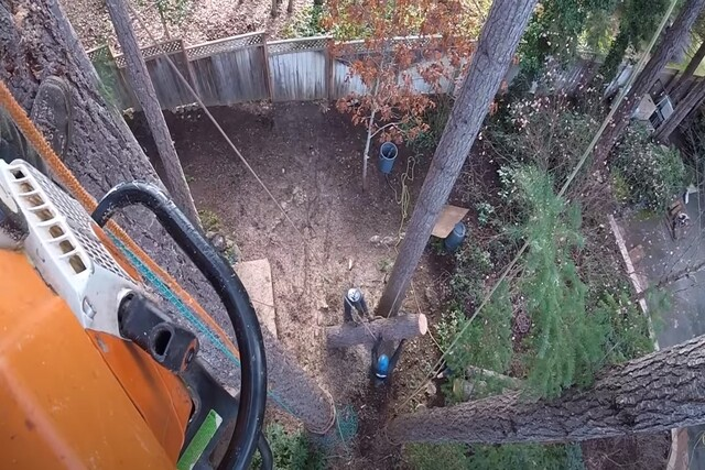 Cutting down a Norman OK tree from high up top a tree.