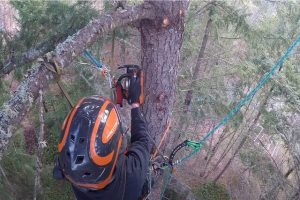 Tree removal with Norman Tree care employee